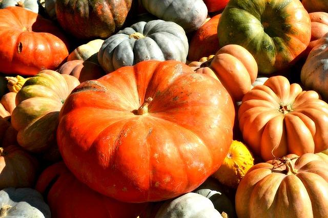 pumpkins-1287299_640